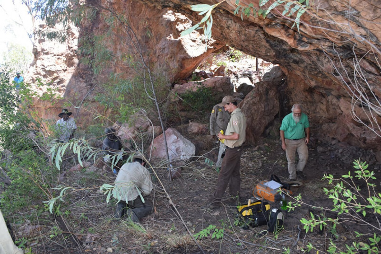 Clearing vegetation from a rock shelter. This technique is to protect rock art from fire damage